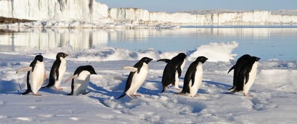 google-penguin-mise-a-jour