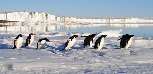 google-penguin-mise-a-jour (Copy)