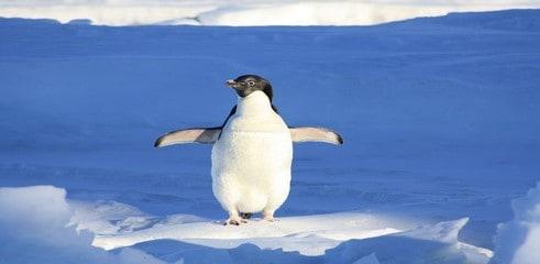 Google: mise à jour de l'algorithme? Nouvelle version de Google Penguin?