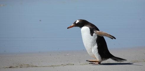 Non, Penguin 4.0 ne va pas désavouer tous les liens, mauvais comme bons, en cas de suspicion