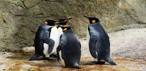 Google Penguin 4.0 : des changements désormais visibles